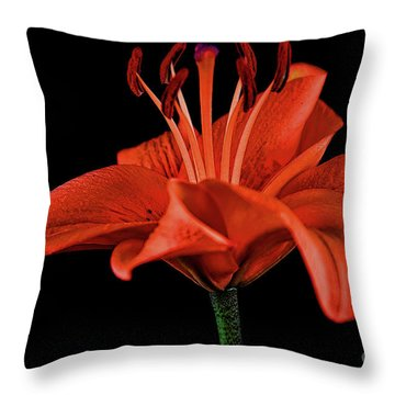 Lily 11018-1 Throw Pillow