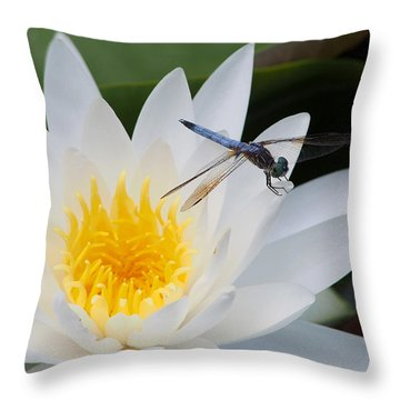 Lily And Dragonfly Throw Pillow