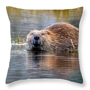 Lily Lake Beaver Throw Pillow