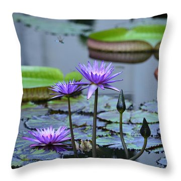 Lily Pond Wonders Throw Pillow by Maria Urso
