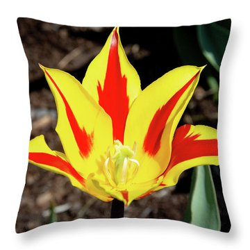 Lily Tulip Throw Pillow