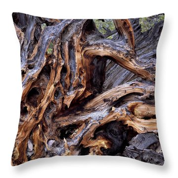 Limber Pine Roots Throw Pillow by Leland D Howard