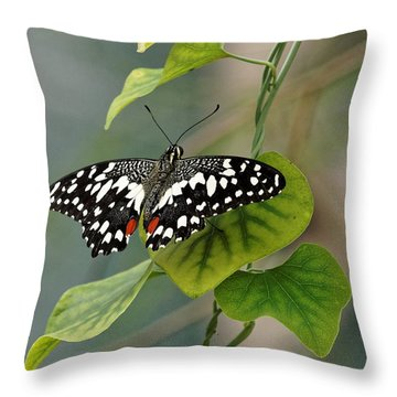 Throw Pillow featuring the photograph Lime/chequered Swallowtail Butterfly by Paul Gulliver