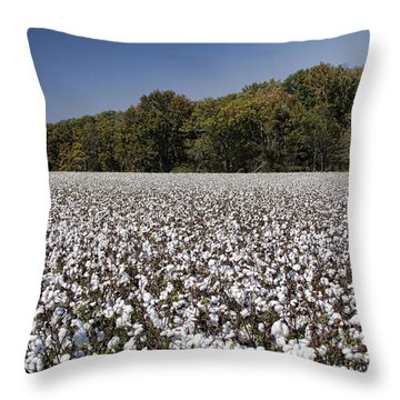 Limestone County Alabama Cotton Crop Throw Pillow by Kathy Clark