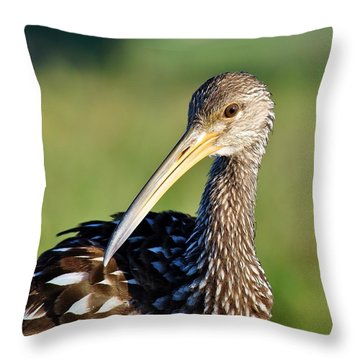 Limpkin 2 Throw Pillow