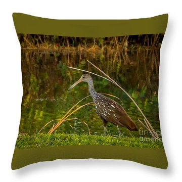 Limpkin At Water's Edge Throw Pillow by Tom Claud