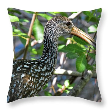 Limpkin In The Thicket Throw Pillow