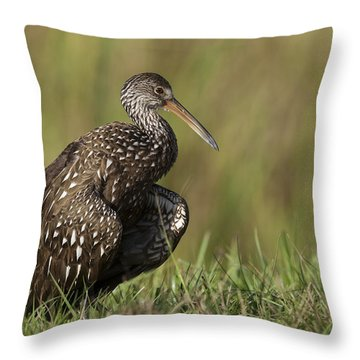 Limpkin Stretching In The Grass Throw Pillow