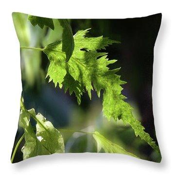 Linden Leaf - Throw Pillow