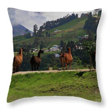 Line-dancing Llamas At Ingapirca Throw Pillow by Al Bourassa