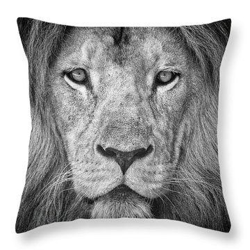 Throw Pillow featuring the photograph Lion 5716 by Traven Milovich