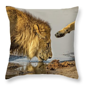 Lion Affection Throw Pillow