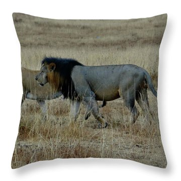 Lion And Pregnant Lioness Walking Throw Pillow