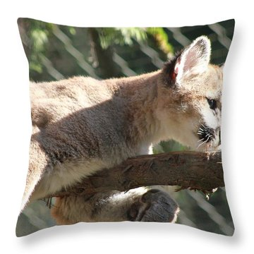 Throw Pillow featuring the photograph Lion Around by Laddie Halupa