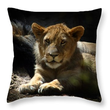 Lion Cub Throw Pillow by Anthony Jones
