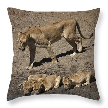 Lion Cubs And Mom Get A Drink Throw Pillow by Darcy Michaelchuk