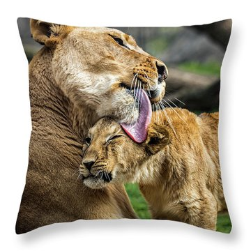 Lion Mother Licking Her Cub Throw Pillow
