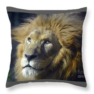 Throw Pillow featuring the photograph Lion Portrait by Savannah Gibbs
