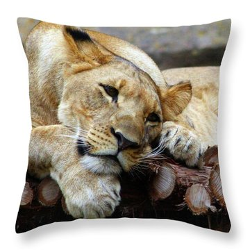 Lion Resting Throw Pillow