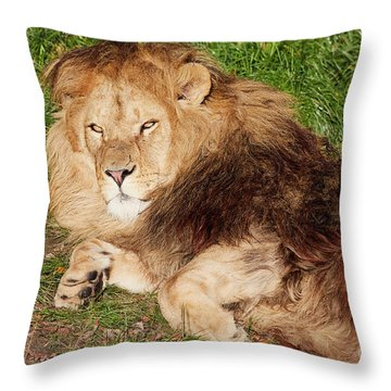 Throw Pillow featuring the photograph Lion Resting In The Sun by Nick Biemans