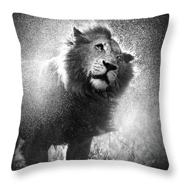 Lion Shaking Off Water Throw Pillow by Johan Swanepoel