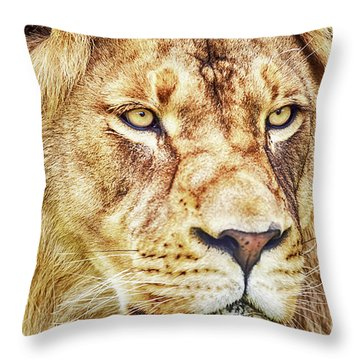 Lion Is The King Of The Jungle Throw Pillow
