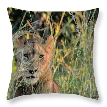 Lion Warily Watching Throw Pillow