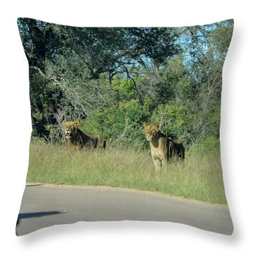 Lion Watch Throw Pillow