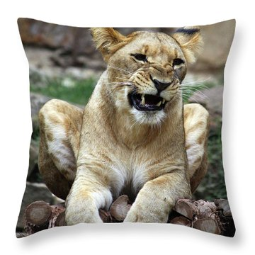 Lioness 2 Throw Pillow