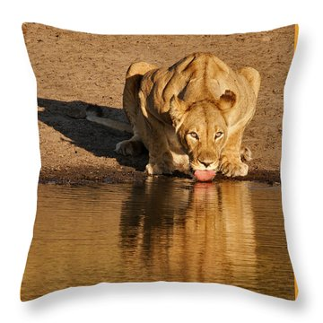 Lioness Drinking Throw Pillow