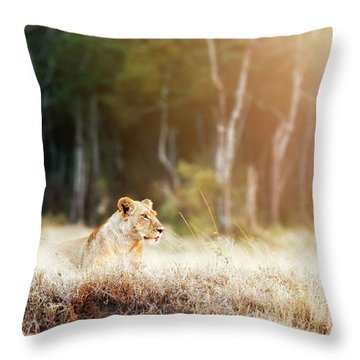 Lioness In Morning Sunlight After Breakfast Throw Pillow