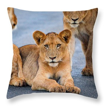 Throw Pillow featuring the photograph Lions Stare by Gaelyn Olmsted