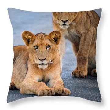 Lions Stare Throw Pillow