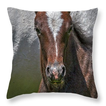 Throw Pillow featuring the photograph Lipizzan Horses #2 by Stuart Litoff