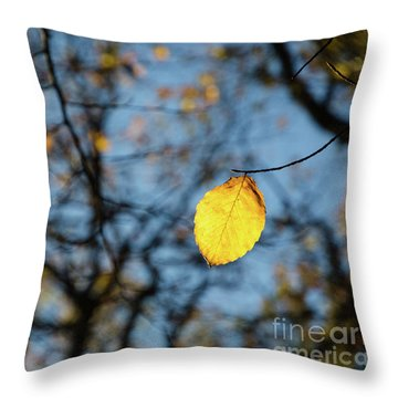 Throw Pillow featuring the photograph Lit Lone Leaf by Kennerth and Birgitta Kullman