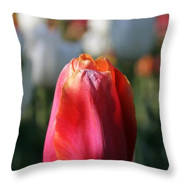 Lit Tulip 03 Throw Pillow