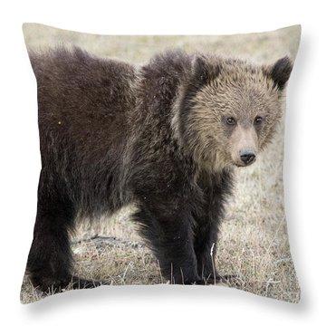 Little America Cub Throw Pillow