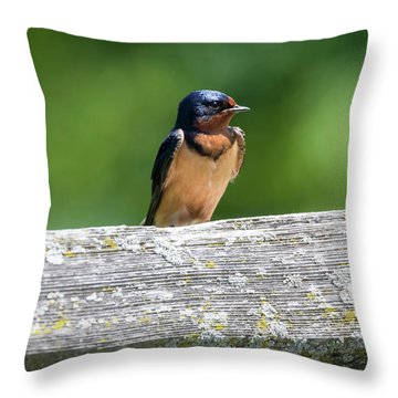 Throw Pillow featuring the photograph Little Barn Swallow by Ricky L Jones