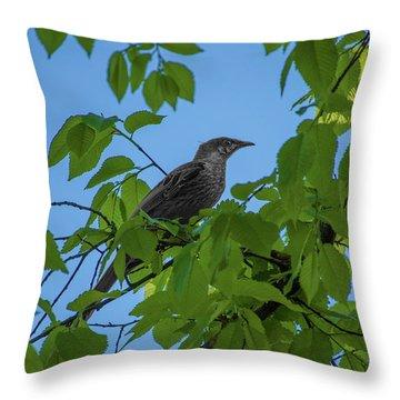 Little Bird In The Tree  Throw Pillow