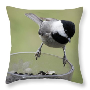 Throw Pillow featuring the photograph Little Bird Looking For A Handout by Jimmie Bartlett