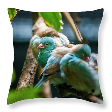 Little Birds Throw Pillow