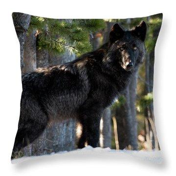 Little Blackie Throw Pillow
