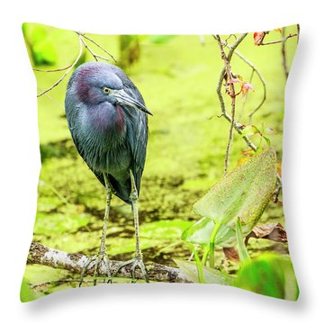 Little Blue Heron At Ollie's Pond Throw Pillow