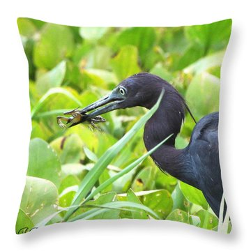Little Blue Heron Catches A Frog Throw Pillow