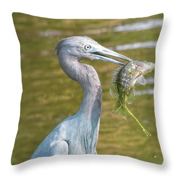 Little Blue Shows Me Its Catch Throw Pillow