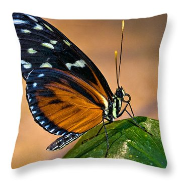 Little Butterfly Throw Pillow by Christopher Holmes