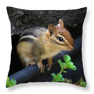 Little Chipmunk  Throw Pillow