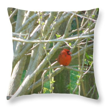 Little Fella Throw Pillow by Charlotte Gray