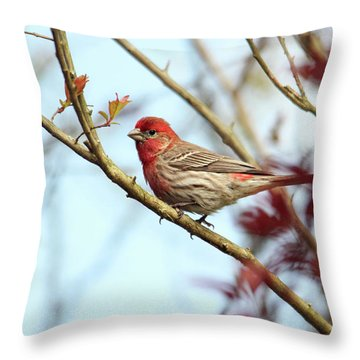 Little Finch Throw Pillow