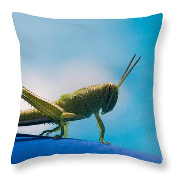 Little Grasshopper Throw Pillow by Christopher Holmes